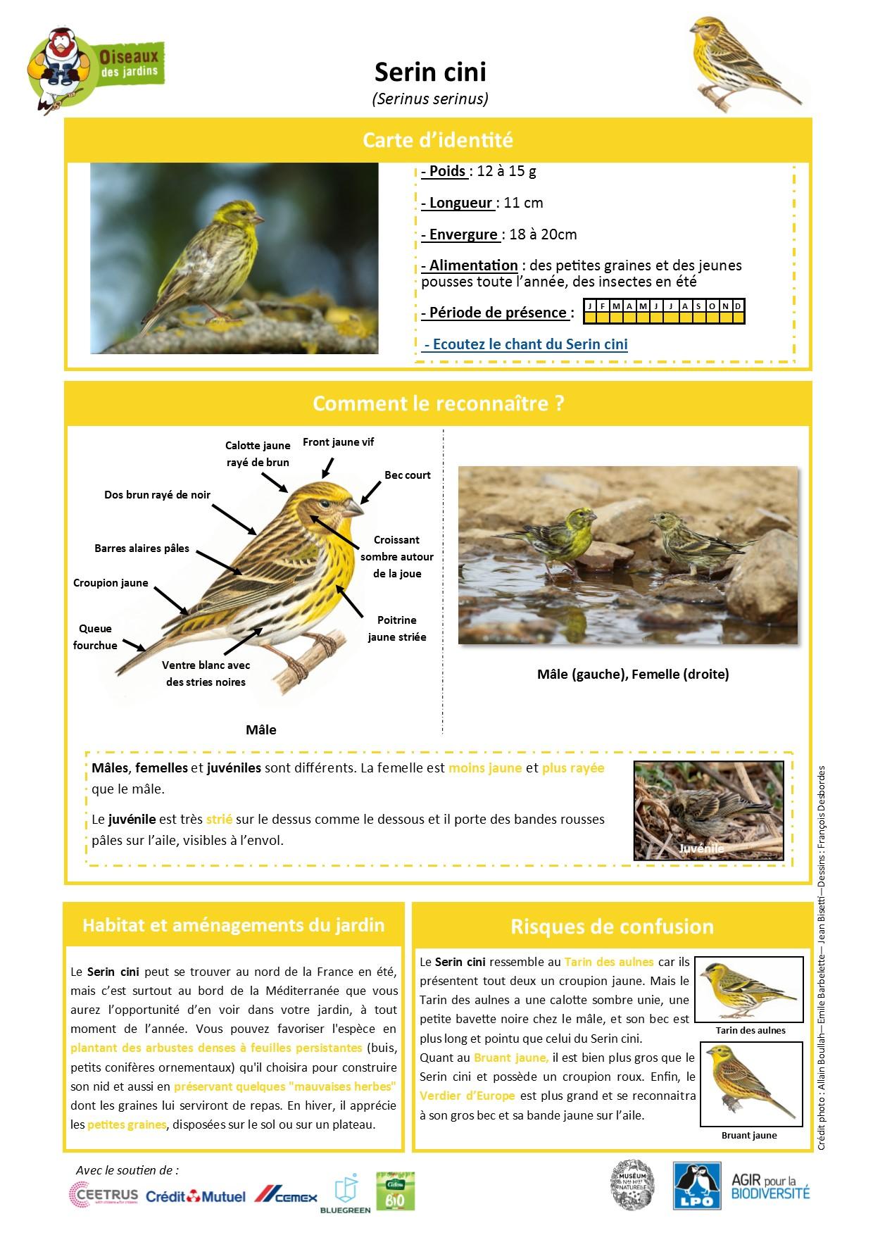 https://cdnfiles1.biolovision.net/www.oiseauxdesjardins.fr/userfiles/Fichesespces/FicheespceSC.jpg