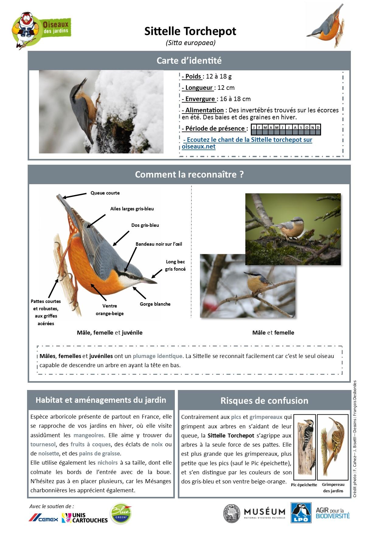 https://cdnfiles1.biolovision.net/www.oiseauxdesjardins.fr/userfiles/Fichesespces/FicheespceST.pdf