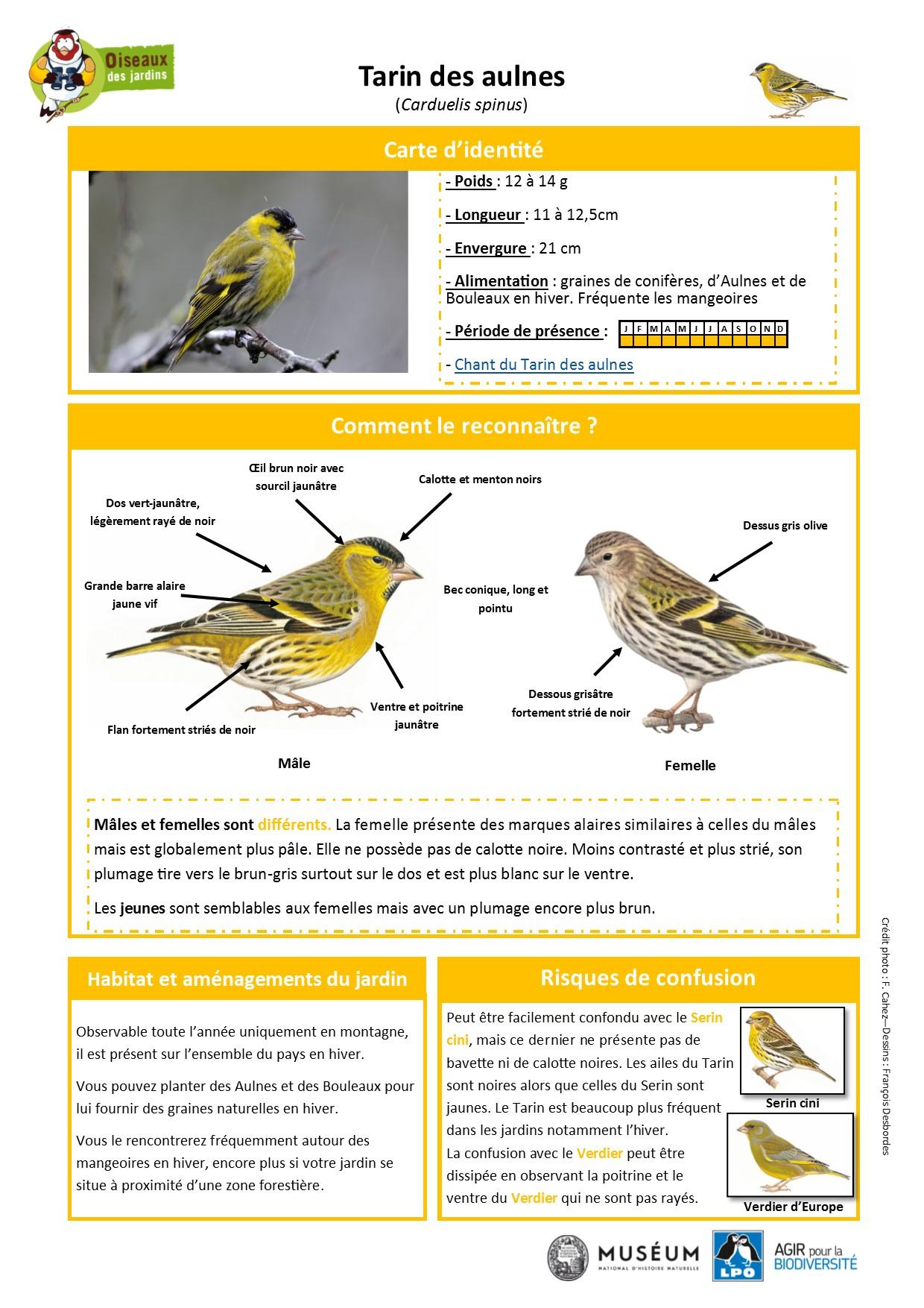 https://cdnfiles1.biolovision.net/www.oiseauxdesjardins.fr/userfiles/Fichesespces/FicheespceTDA.pdf