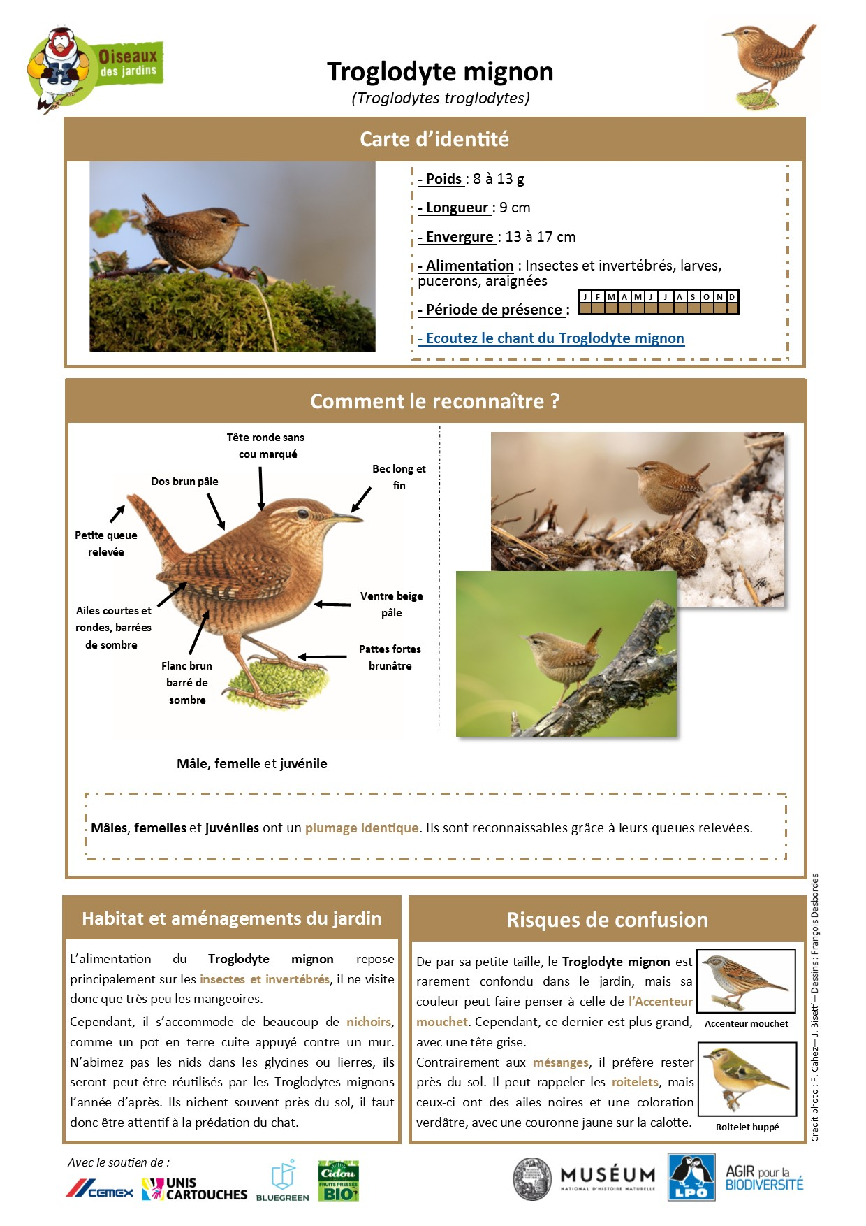 https://cdnfiles1.biolovision.net/www.oiseauxdesjardins.fr/userfiles/Fichesespces/FicheespceTM.pdf