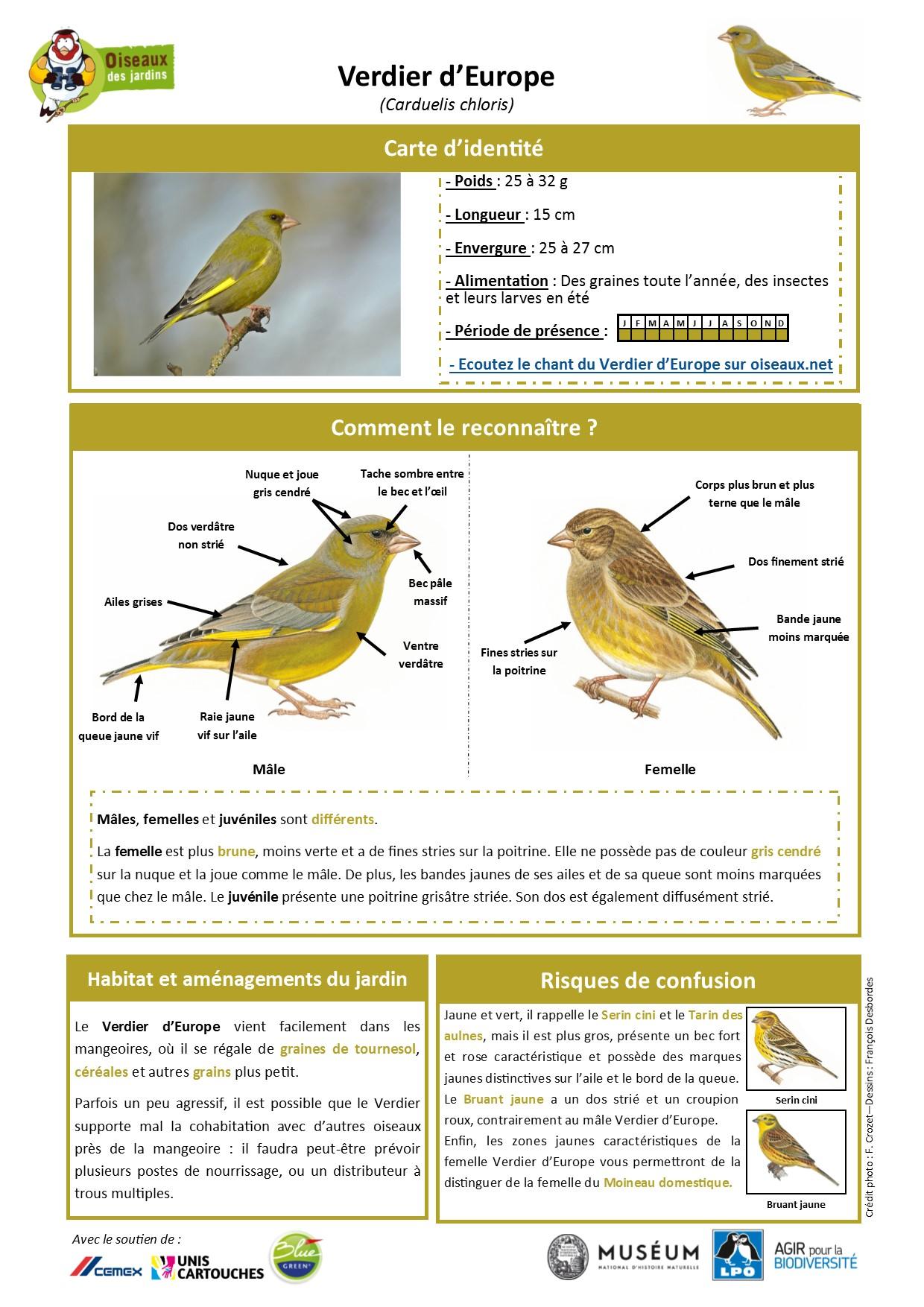https://cdnfiles1.biolovision.net/www.oiseauxdesjardins.fr/userfiles/Fichesespces/FicheespceVE.pdf