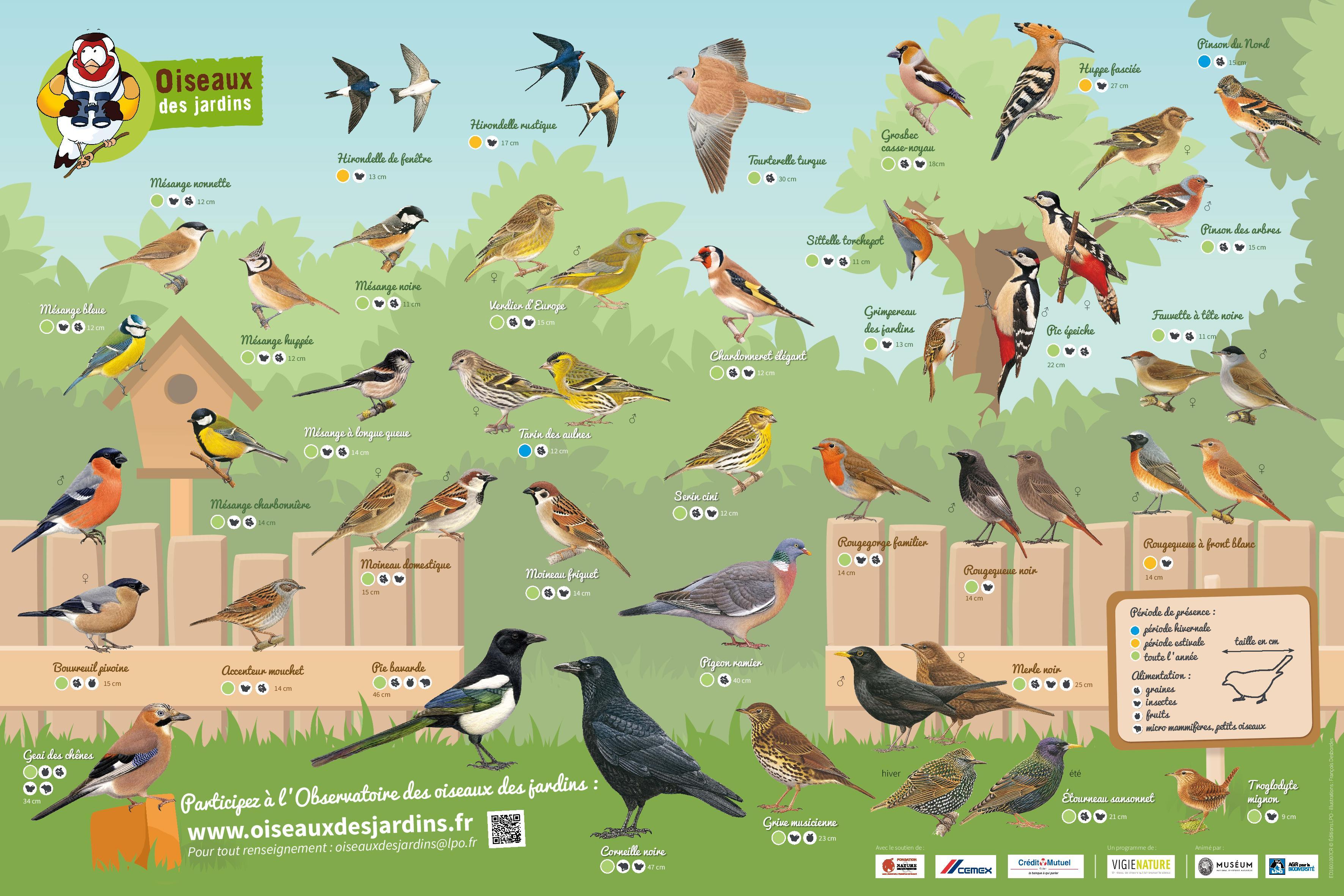https://cdnfiles1.biolovision.net/www.oiseauxdesjardins.fr/userfiles/PosterODJ2016.jpg