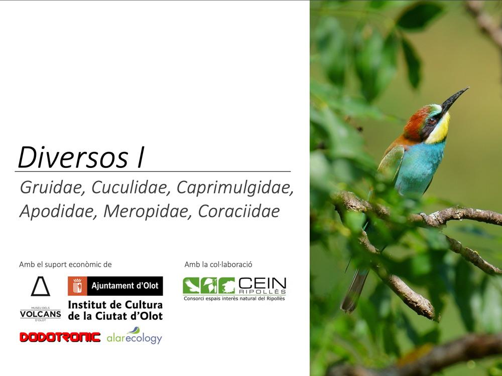 https://cdnfiles1.biolovision.net/www.ornitho.cat/userfiles/Nocmig/DIVERSOSNOPAsseriformes.jpg